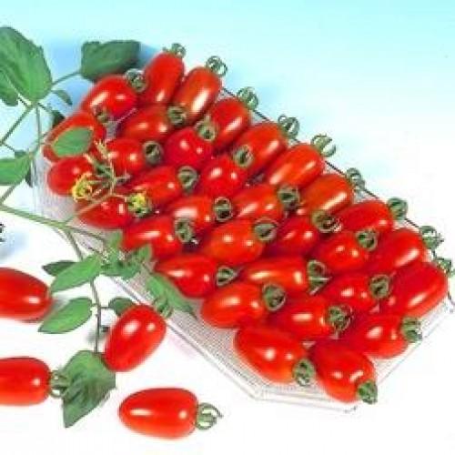 Hạt giống cà chua bi TH