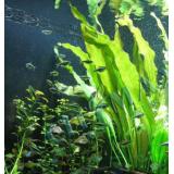 Dinh dưỡng cây trồng cao cấp – phân organic rong biển – Seaweed Extract – superior organic fertilizer