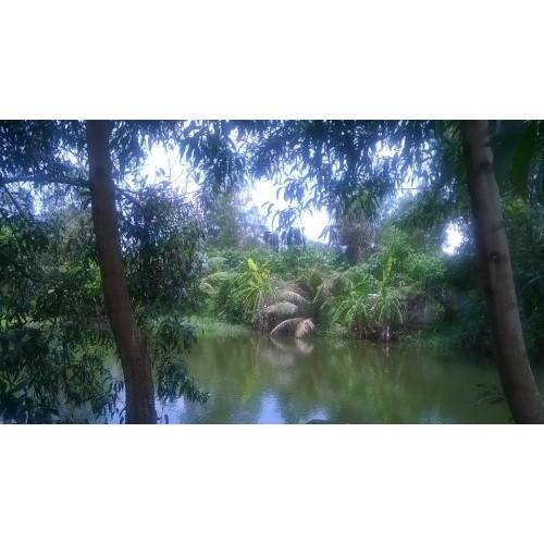 Nông trang xanh – Cần hợp tác đầu tư quán vườn sinh thái sạch ở Bình Chánh – Tp.HCM