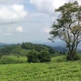 Nông trang xanh – đầu tư trang trại ở Bảo Lộc – Lâm Đồng