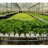 Nông trang xanh – Trang trại Trồng rau sạch (rau an toàn) thủy canh