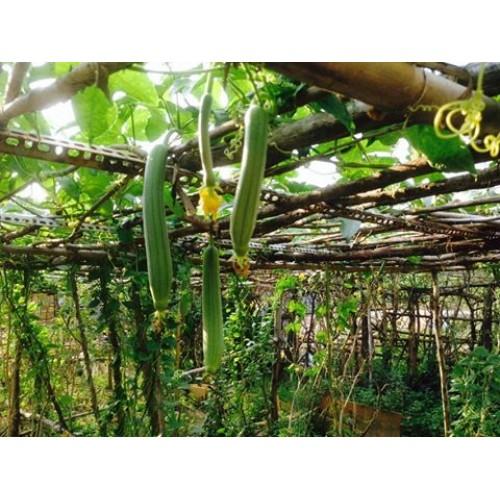 Nông trang xanh – Vườn rau hữu cơ ở Nhà Bè